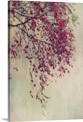 Colour Leaves