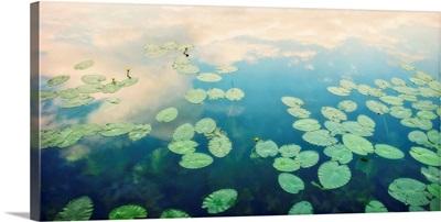 Waterlilies Home