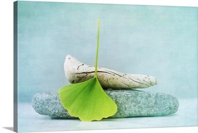 Wood, Stone And A Gingko Leaf
