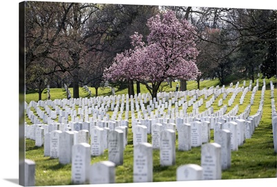 Arlington National Cemetery in the Spring