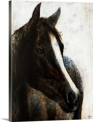 Brown Stallion