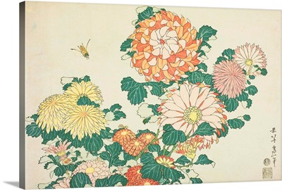 Chrysanthemums And Bee, From An Untitled Series Of Large Flowers