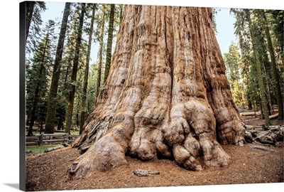Close Up Of The General Sherman Tree In Sequoia National Park, California