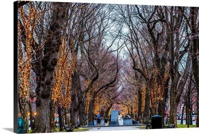 Commonwealth Avenue, Boston, MA