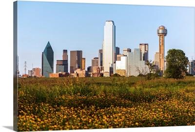Dallas Skyline With Wildflowers, Texas