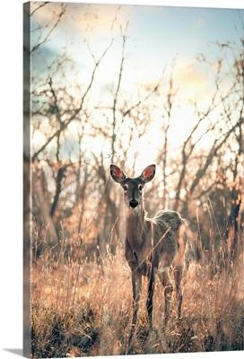 Deer in Sidecut Metropark, Ohio