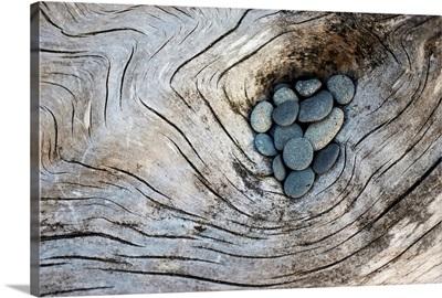 Driftwood and Rocks II