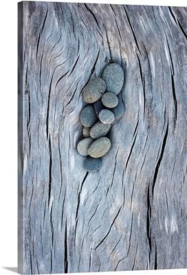 Driftwood and Rocks III