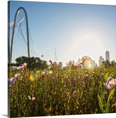 Field of flowers in Dallas