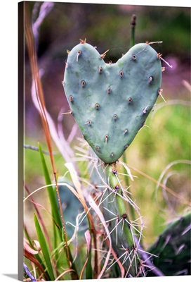 Heart-Shaped Cactus, Grand Canyon National Park, Arizona