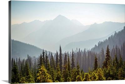 Hurricane Ridge And Wilderness, Olympic National Park, Washington