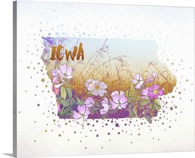 Iowa State Flower (Wild Rose)