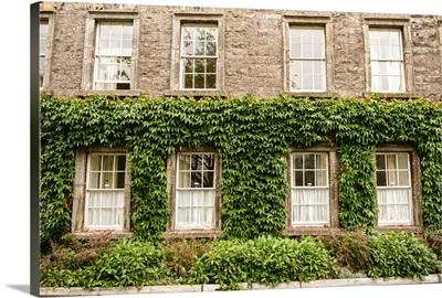 Leafy Facade in Dublin
