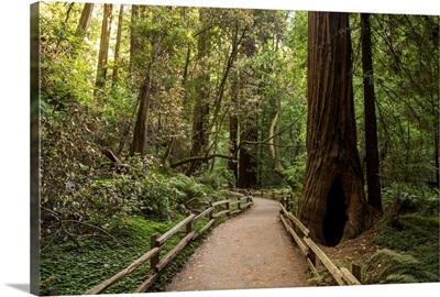 Muir Woods, Golden Gate National Recreation Area