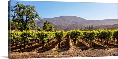 Panoramic Vineyard, Napa Valley, CA