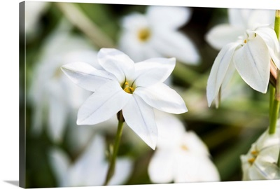 Photo Nature - All About Jasmine