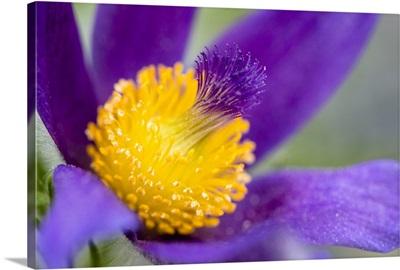 Photo Nature - Iris