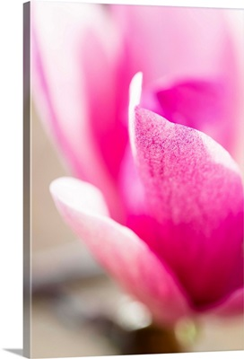 Photo Nature - Pretty In Pink