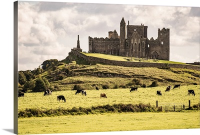 Rock of Cashel with Cows, Cashel, County Tipperary, Ireland