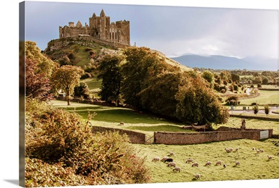 Rock of Cashel with Sheep Landscape, Cashel, County Tipperary, Ireland