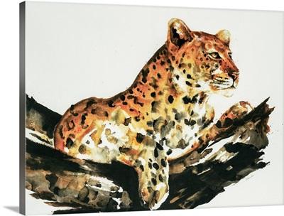 Safari Series I