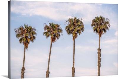 San Diego Palm Trees, California