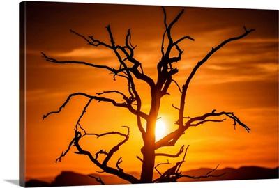 Sun Peeking Through Branches Of A Tree, Grand Canyon National Park, Arizona
