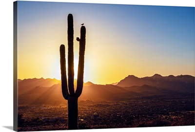 Sun Peeking Through Saguaro Cactus At Sunset In Phoenix, Arizona