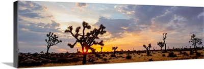 Sunrise At Joshua Tree National Park, California