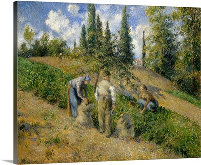 The Harvest, Pontoise (La Recolte, Pontoise)