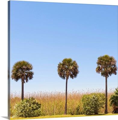Three Palm Trees, Houston TX