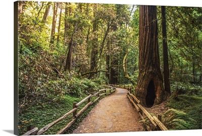 Tree Lined Path, Napa Valley, California