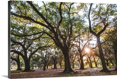 Trees In New Orleans Park, Louisiana