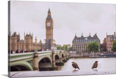 Two Birds on River Thames, Westminster, London, UK