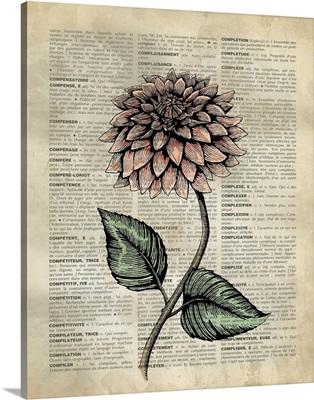 Vintage Dictionary Art: Dahlia
