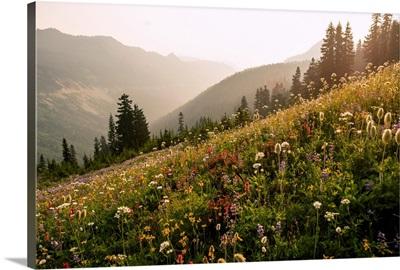 Wildflowers, Mount Rainier National Park, Washington