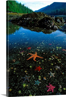Low tide reveals star fish and other sea creatures, Queen Charlotte Islands, Canada