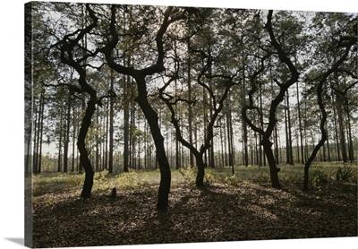 Ocala National Forest, Florida