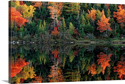 Reflection of autumn foliage in water, Canada
