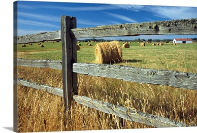 Rolls of hay fill a farmer's field