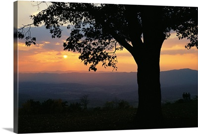 Sunset and silhouetted oak tree over the Shenandoah valley