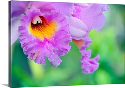 Vivid, ornamental pink flower radiates in the noonday sun