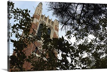 MSU Pictures Beyond the Branches