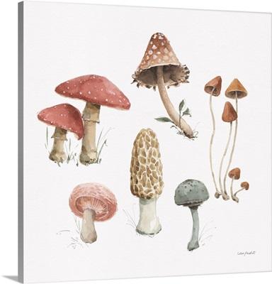 Mushroom Medley 03
