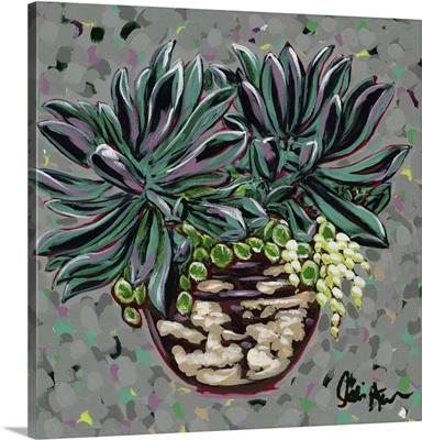 Succulent Pot I