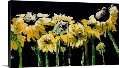Sunflower Field On Black
