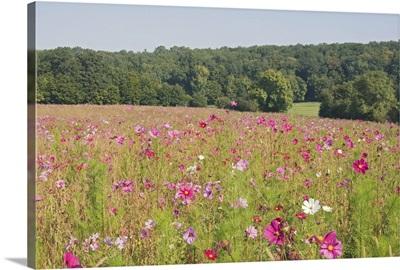 A field of wild flowers, Loire Valley, France