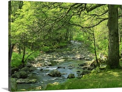 Afon Artro passing through natural oak wood, Llanbedr, Gwynedd, Wales, UK