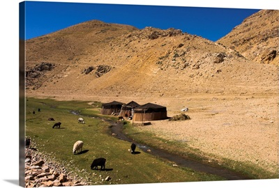 Aimaq nomad camps, near village of Jam, Afghanistan, Asia