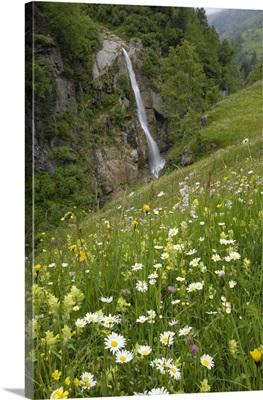 Alpine meadow, Venter Tal near Vent, Otztal valley, Tyrol, Austria